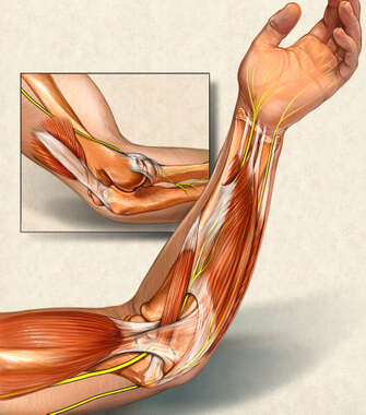 Muscles of the Upper Extremity