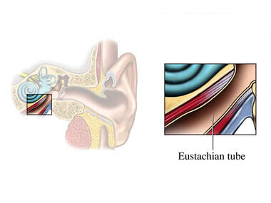 The Eustachian Tube