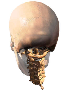 Posterior Cervical Spine and Skull