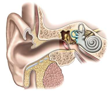 The Ear: Outer, Middle and Inner Ear