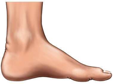 Medial View of the Foot