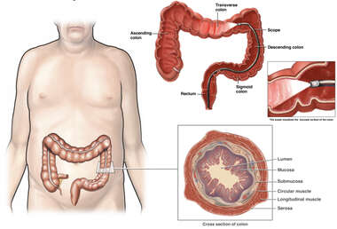 Anatomy of the Colon with Colonoscopy Procedure