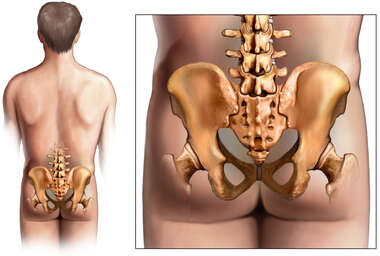Anatomy of the Hip and Sacroiliac Region