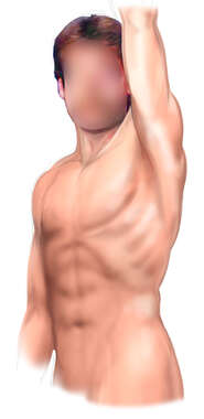 Male Figure: Thoracic Region