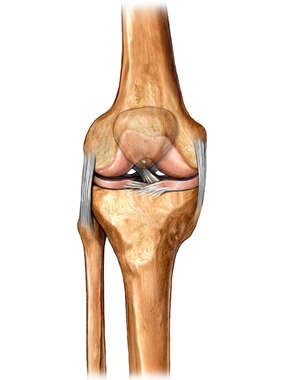 Knee Bones with Ligaments, Anterior View