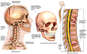 Injuries and Fractures to the Skull and Spine