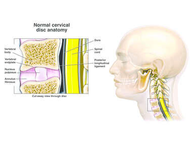 Normal Anatomy of the Cervical Disc