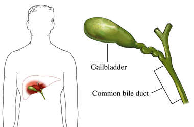 The Common Bile Duct
