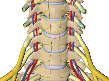 Cervical Vertebral Region