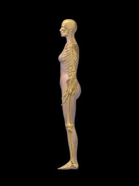 Lateral Female Figure with Skeletal and Nervous Systems