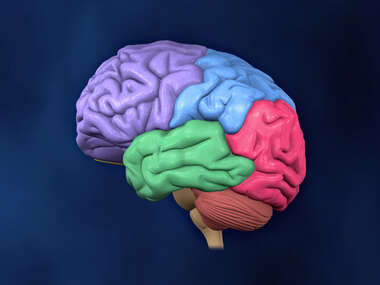 Left Lateral view of the Brain (color coded lobes)