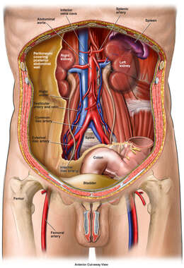 Anatomy of the Retroperitoneal Space