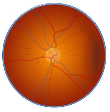 The Retina of the Eye