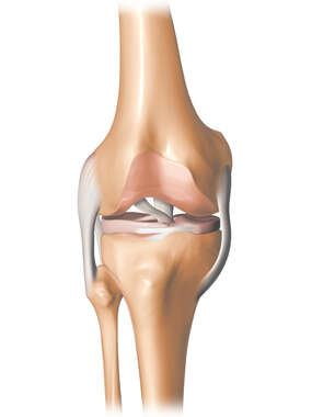Knee 3D -Stylized Large