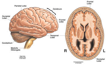 Brain Injury to the Cerebrum and Cerebellum