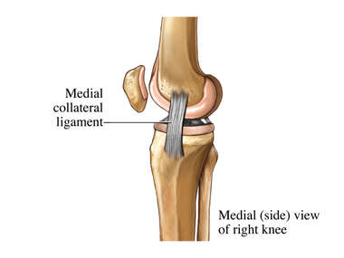 Medial Knee Ligaments