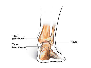 Posterior (Back) View of Ankle