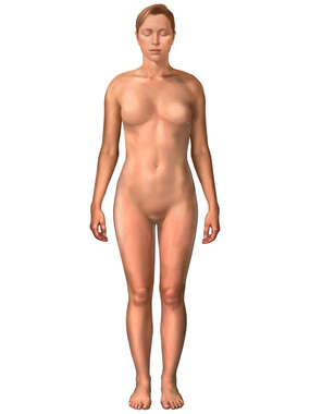 Figure of Woman: Anterior View