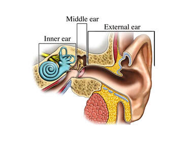 Regions of the Ear