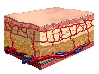 Elderly Skin Section
