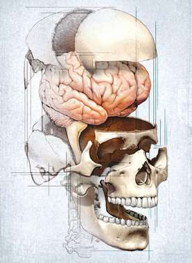 Stylized View of Skull with Brain