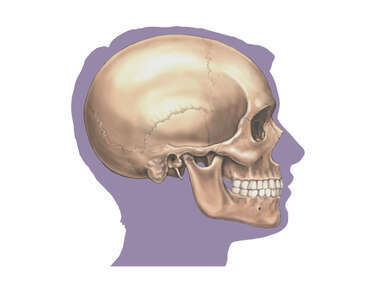 The Skull (Side View)