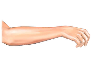 The Hand and Forearm