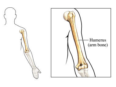 The Humerus (Front View)