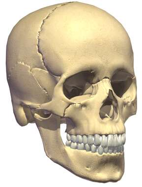 Skull: oblique view