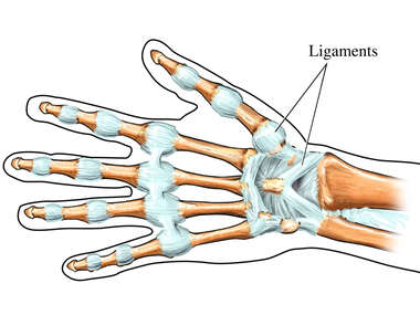 Ligaments of the Hand