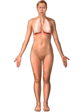 Female Figure with Lungs