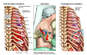 Right Chest Injuries with Surgical Thoracotomy
