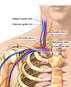 Anatomy of the Great Vessels and Brachial Plexus