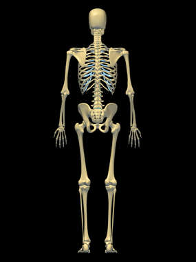 Anatomy of the Skeletal System, 3D Posterior Male: Black Background