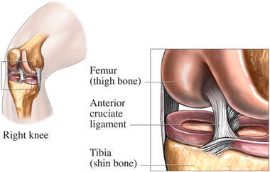 Anatomy of the Anterior Cruciate Ligament