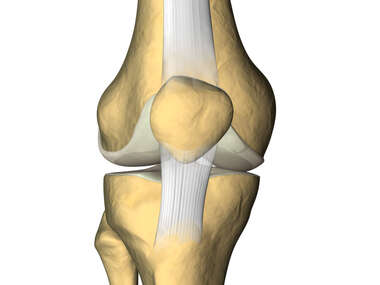 Anterior Skeletal Knee