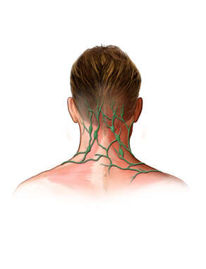 Lymph Nodes of the Occipital Region