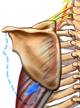 Scapular Movement