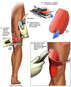 Surgical Debridement and Skin Grafting of the Left Knee