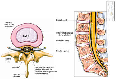 Normal Anatomy of the Lumbar Spine