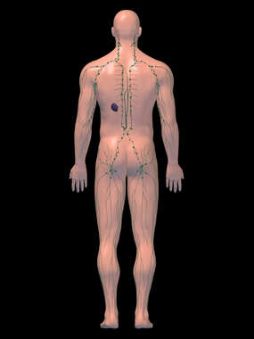 Anatomy of the Lymphatic System, 3D Posterior Male-BW