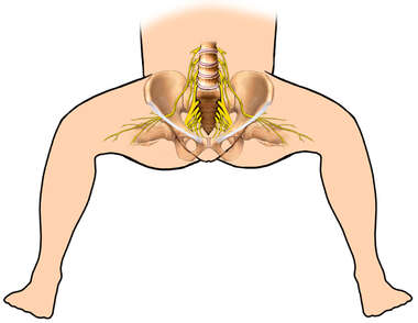 Lithotomy Position and Spinal Nerves