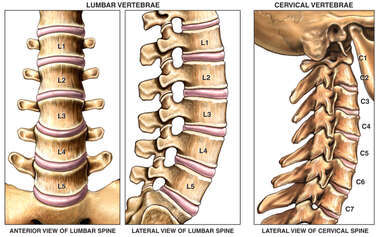 Normal Anatomy of the Lumbar and Cervical Regions of the Spine