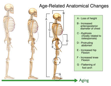 Age Related Anatomical Changes