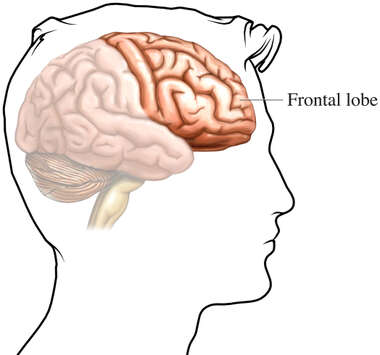 The Frontal Lobes of the Brain