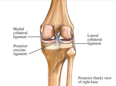 Posterior Knee Ligaments