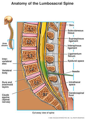 Anatomy of Lumbrosacral Spine