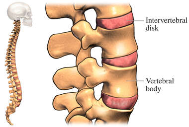 Intervertebral Disks of the Spine