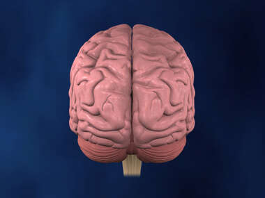 Posterior view of Brain