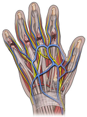 Dorsal View of Hand Injury